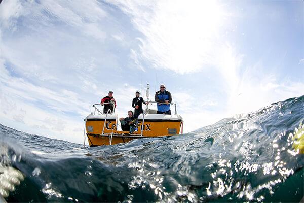 Blue Shark Snorkel The Boat