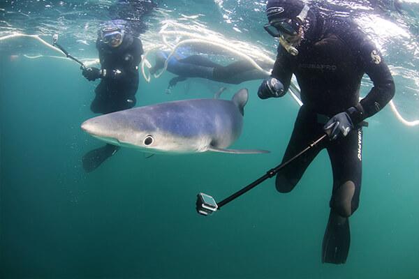 Blue Shark Snorkel FAQ's