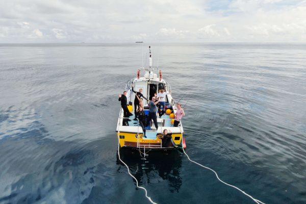 Blue Shark Snorkel 1 600x400 - The Boat