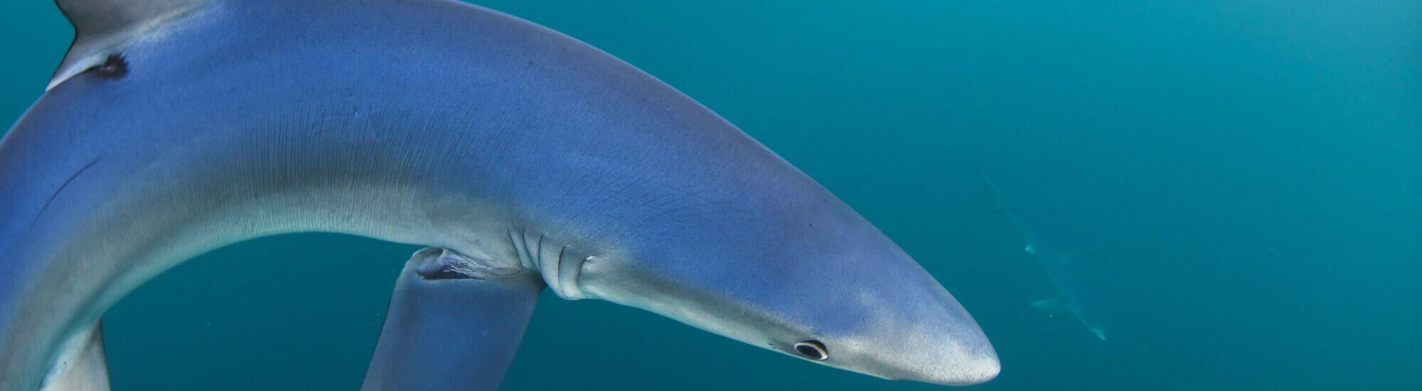 blue shark snorkel tours 2000x550 - Tours